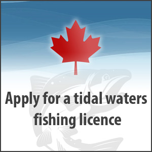 Apply for a tidal waters fishing licence